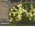 Web Del Santuario Virgen De La Lesperanza